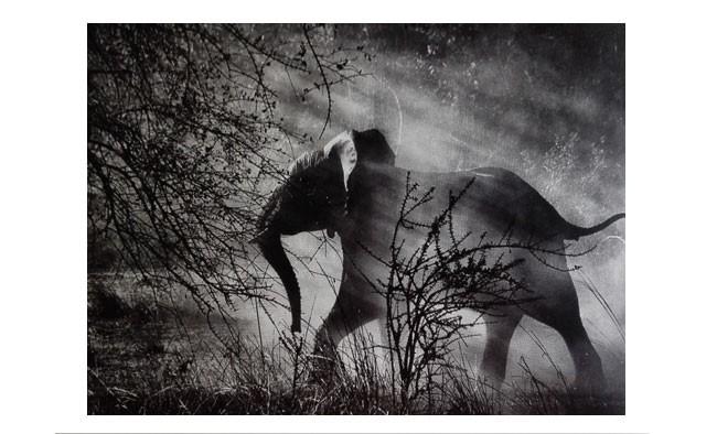 Elefant in der Steppe von Afrika von Sebastiao Salgado fotografiert